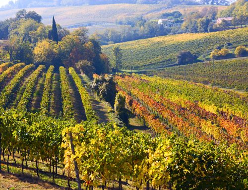 Equalitas and Assobenefit sign an agreement on the promotion of benefit companies in the wine sector